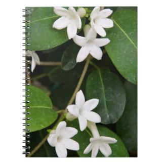 Notebook - Algerian Ivy
