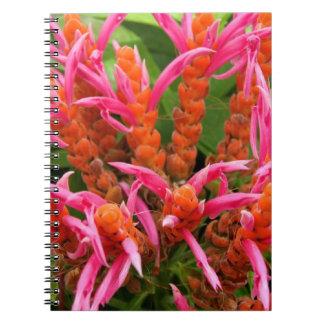 Notebook - Coral Aphelandra