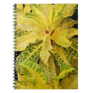 Notebook - Croton