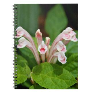 Notebook - Pink Skullcap