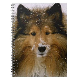 Notebook - Shetland Sheepdog in Snow