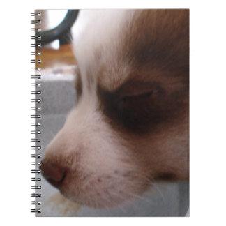 Notebook - Siberian Husky