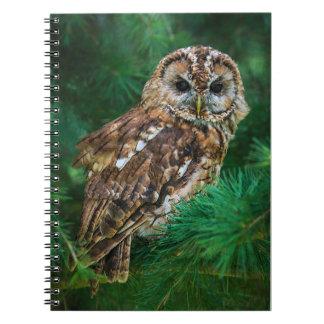Notebook tawny owl in a fir tree