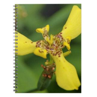 Notebook - Tiger Eye Iris