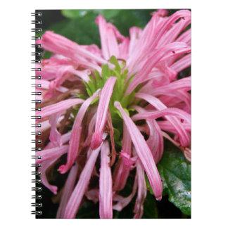 Notebook - White Brazilian Plum