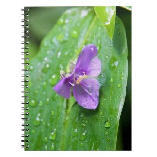 Notebook - Widows Tears