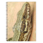 Notebook With Photos (80 Pages) Small lizards