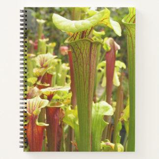 Notebook with Sarracenia flava Photos