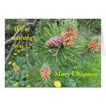 Notecard: Árbol de pino y conos, montañas de la do Tarjeta