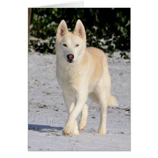 Notecard blanco del husky siberiano felicitación