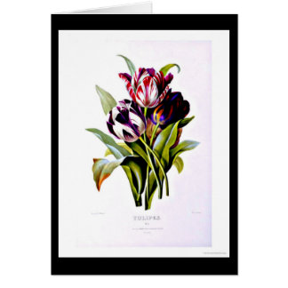 Notecard-Botanicals-Pierre Joseph Redoute 15 Stationery Note Card