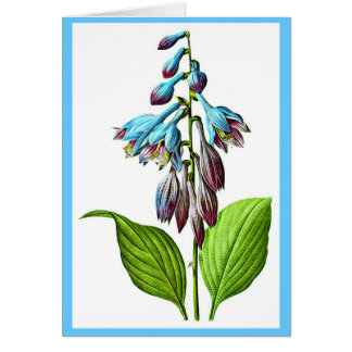 Notecard-Botanicals-Pierre Joseph Redoute 17 Stationery Note Card