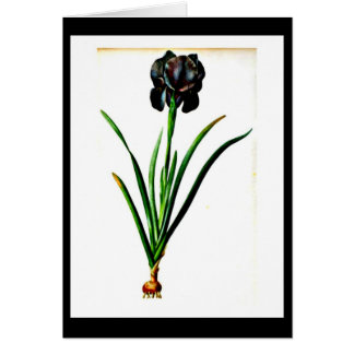 Notecard-Botanicals-Pierre Joseph Redoute 18 Stationery Note Card