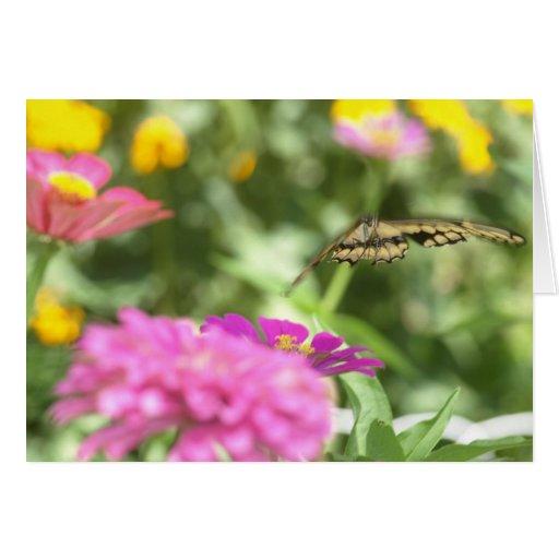 Notecard con la mariposa de Swallowtail Tarjeta Pequeña