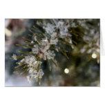 NOTECARD, Crystal flakes on Spruce Needles Card