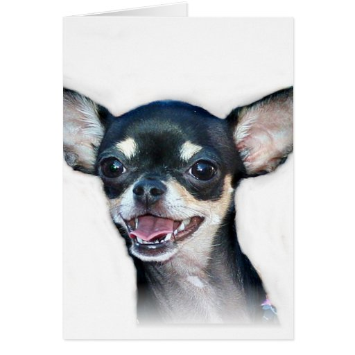 Notecard de la chihuahua tarjeta pequeña