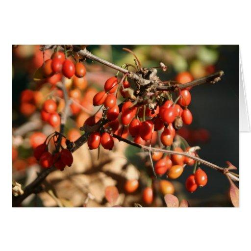 notecard de las bayas del otoño tarjeta pequeña