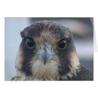 Notecard del halcón tarjeta pequeña