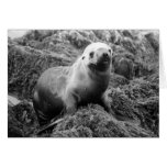 Notecard del león marino