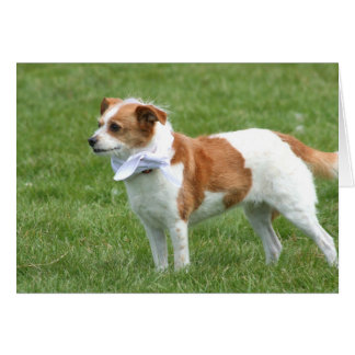 Notecard del perro de la mezcla de Terrier Felicitaciones