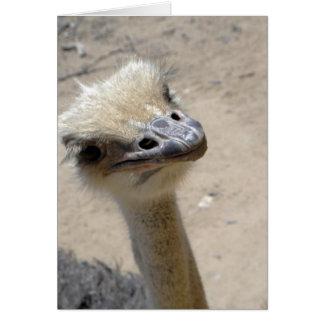 Notecard divertido de la avestruz tarjeta pequeña