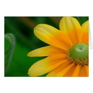 Notecard, Floral Photo Blank Inside Card