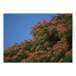 Notecard floreciente del árbol del Mimosa