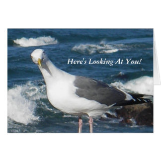 Notecard:  Here's Looking At You Gull Card
