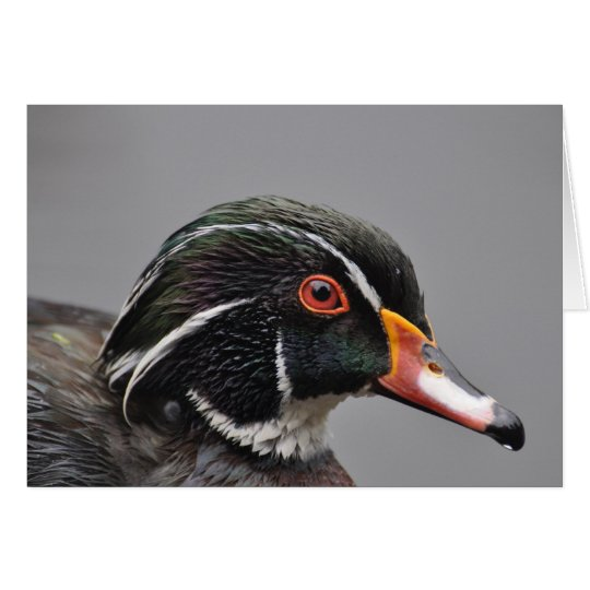 Notecard: Male American Wood Duck Card