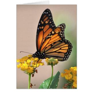 notecard - mariposa de monarca