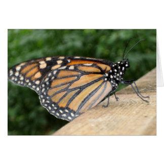 Notecard - Monarch Butterfly
