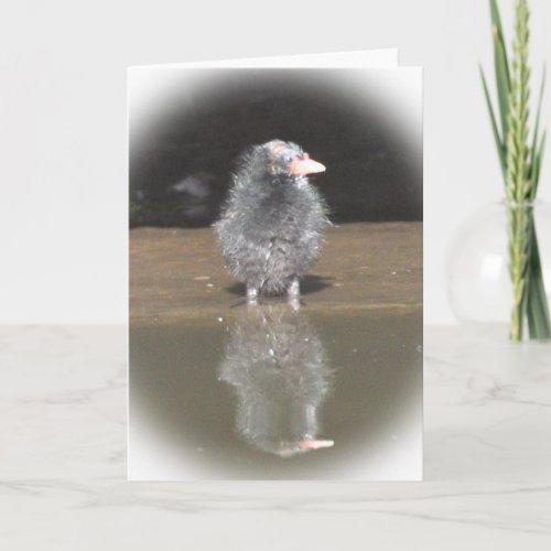 Notecard: Moorhen Chick card