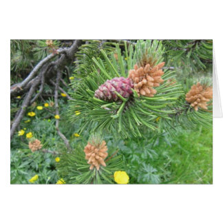 Notecard: Pine Tree & Cones, Dolomite Mountains Card