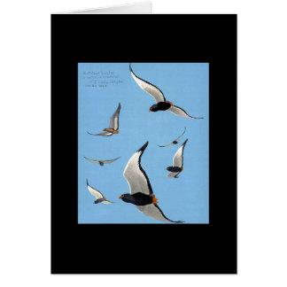 Notecard-Vintage Chicago Art-Abyssinian Birds 13 Cards
