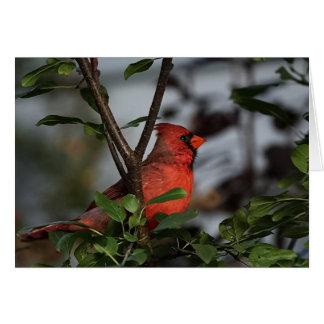 Notecard with Beautiful Resting Cardinal