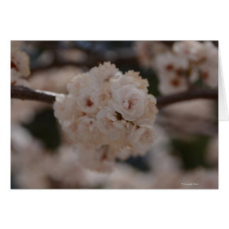 Notecard with Canadian Plum Tree Blossom