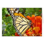 Notecard with Monarch Butterfly Greeting Cards