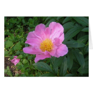 Notecard with Single Pink Peony Stationery Note Card