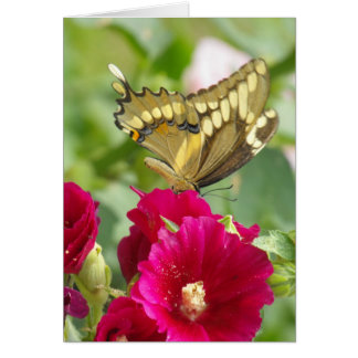 Notecard with Swallowtail Butterfly