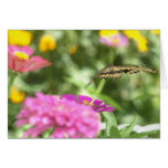 Notecard with Swallowtail Butterfly Greeting Card