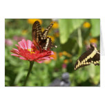 Notecard with Two Swallowtail Butterflies Greeting Card