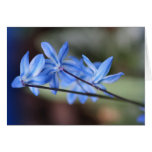 Notecard with Variegated Scilla Greeting Card