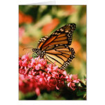 Notecards de la mariposa de monarca tarjeta