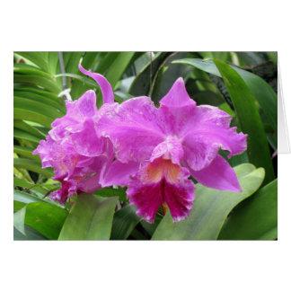 Notecards de la naturaleza---Orquídeas para usted Tarjetas