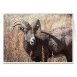 Notecards de las ovejas de Bighorn Tarjetas