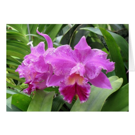 Notecards from Nature---Orchids  for You Greeting Card