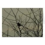 Notecards: Little Bird Greeting Card
