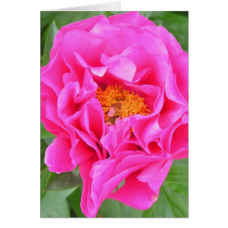 NOTECARDS, PHOTOGRAPHY, FLORAL, PEONY, PINK, BLANK CARD