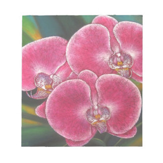 Notepad Pink Phalaenopsis Orchids Painting