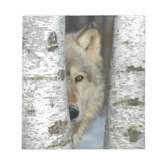 notepad with pic of gray wolf in birch trees